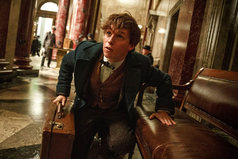 Eddie Redmayne searches for one of the title creatures in FANTASTIC BEASTS AND WHERE TO FIND THEM.