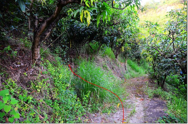 番子埔山登山路線