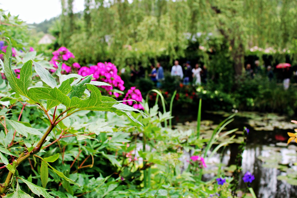 Drawing Dreaming - visitar Giverny, a casa e os jardins de Claude Monet