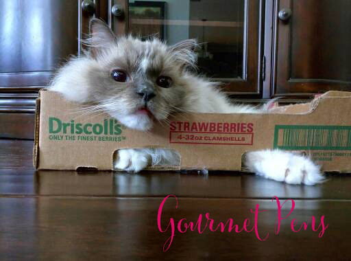 Whiskers & Paws January 2017 Edition 5