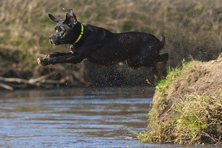 Dog floating above water | by Hans Surfer (where the action is)