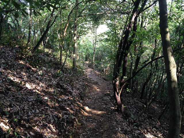 金華山 東坂ハイキングコース 迂回路