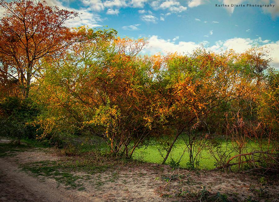Aromita, el perfume del Chaco