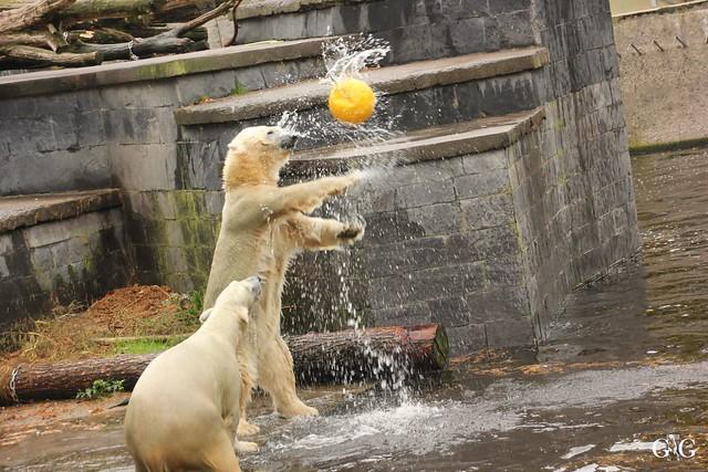 Zoo Rostock 02.10.201614