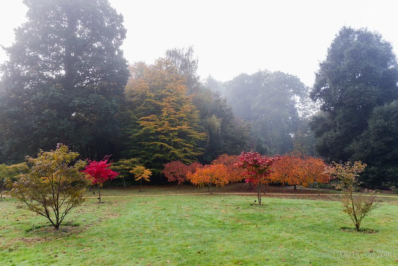 Acer Glade in fog