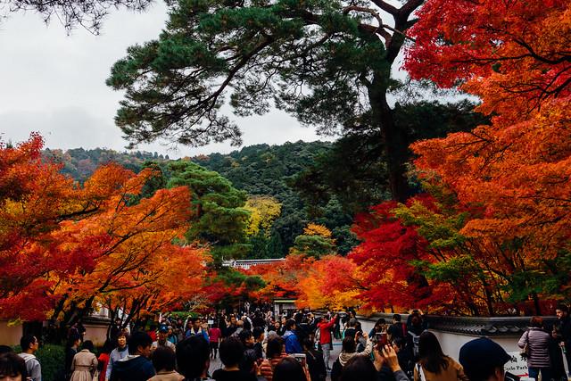 Kyoto_Eikando_26