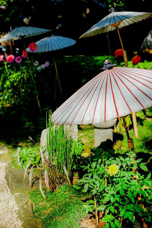 上野東特別祭典~ダリア綾なす秋の園~照宮ぼたん苑