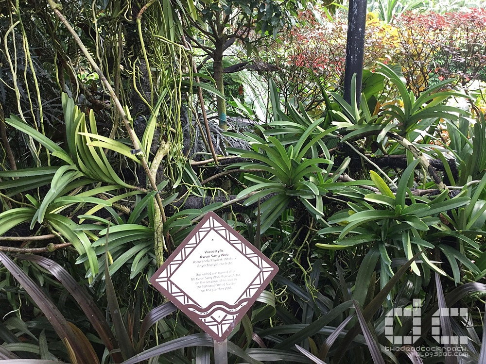 botanic gardens, places of interest, singapore, singapore botanic gardens, unesco,  where to go in singapore, national orchid garden,celebrity garden,orchid
