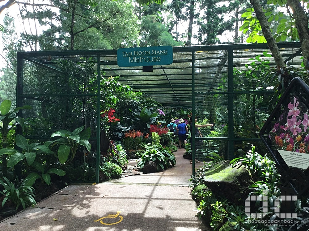 botanic gardens, places of interest, singapore, singapore botanic gardens, unesco,  where to go in singapore, national orchid garden,misthouse,tan hoon siang misthouse