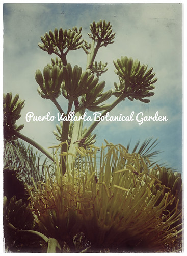 Retro Puerto Vallarta Botanical Garden poster in Snapseed
