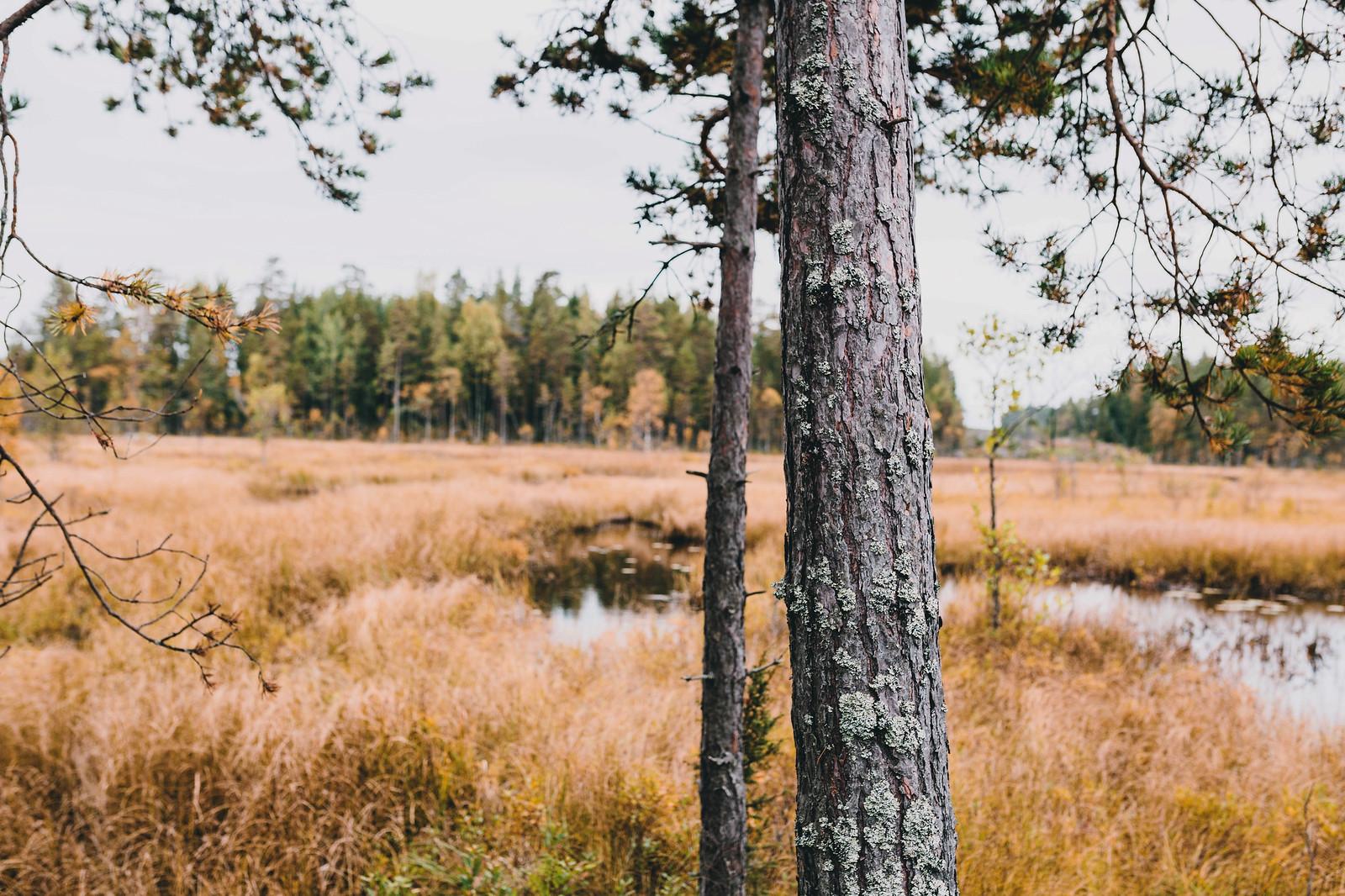 Sjön - Evelinas Ekologiska