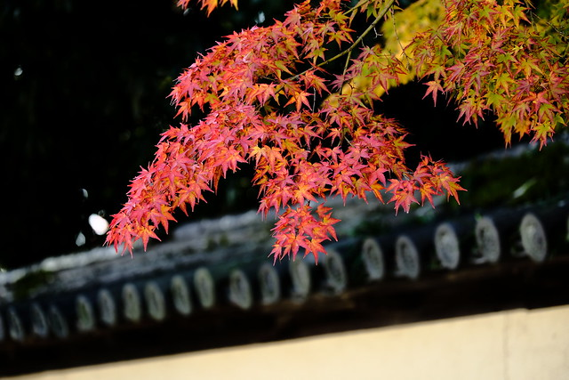 Autumn leaves in the precincts of the temple