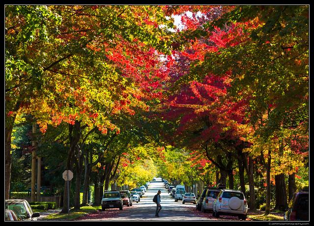 Vancouver Autumn 2016