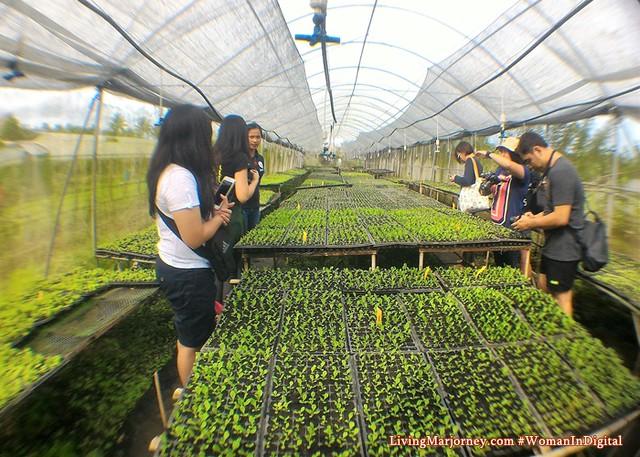 Nursery-Costales-Farm