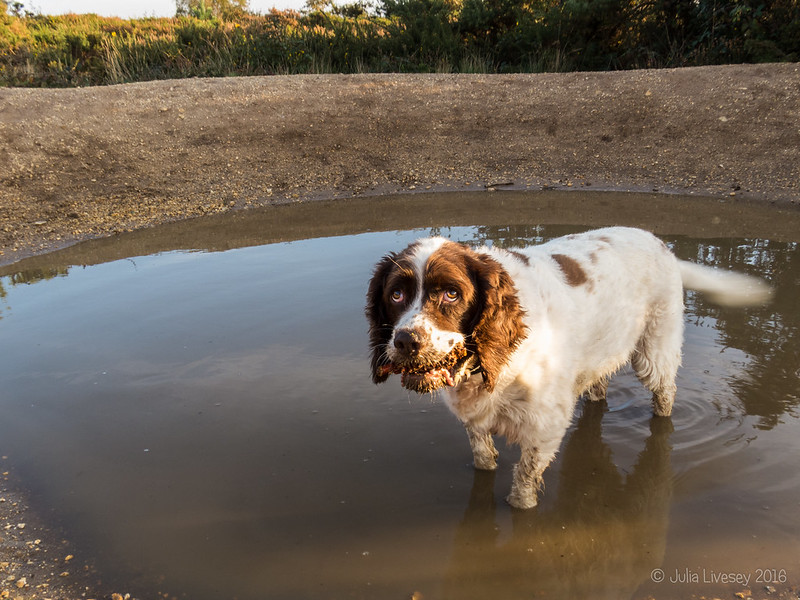 Max in a big puddle