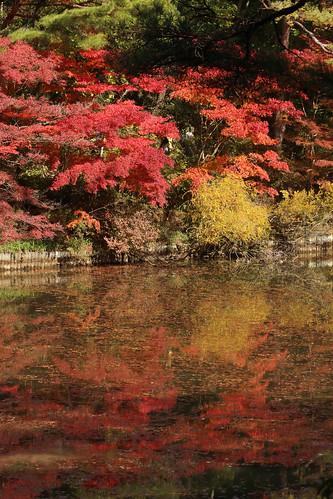 森林植物園紅葉