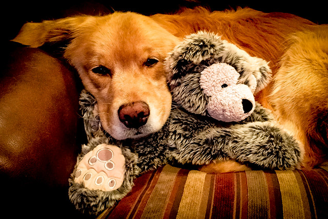 Snuggling With Teddy