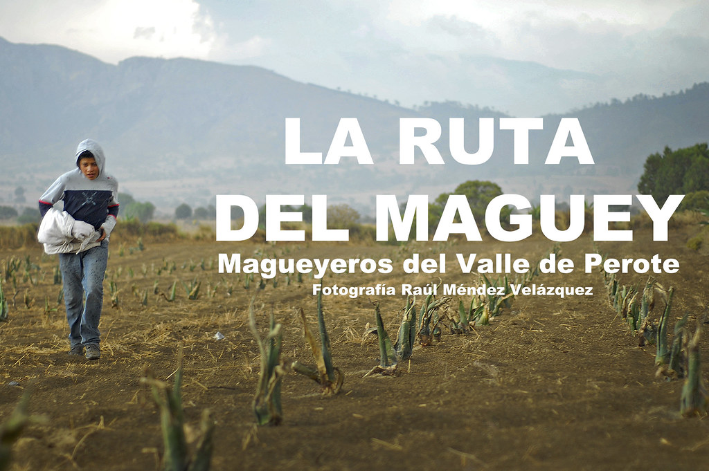 La ruta del Maguey
