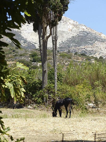 l'âne 2
