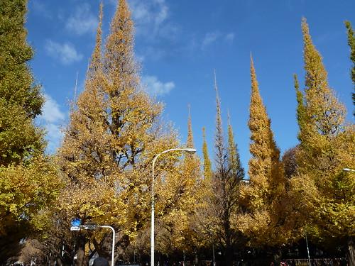 秋季ITSウォーキング大会 いちょう並木