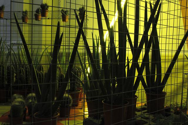 Cactus light