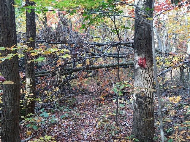 North Loop - Logan Trail - Tar Hollow State Park