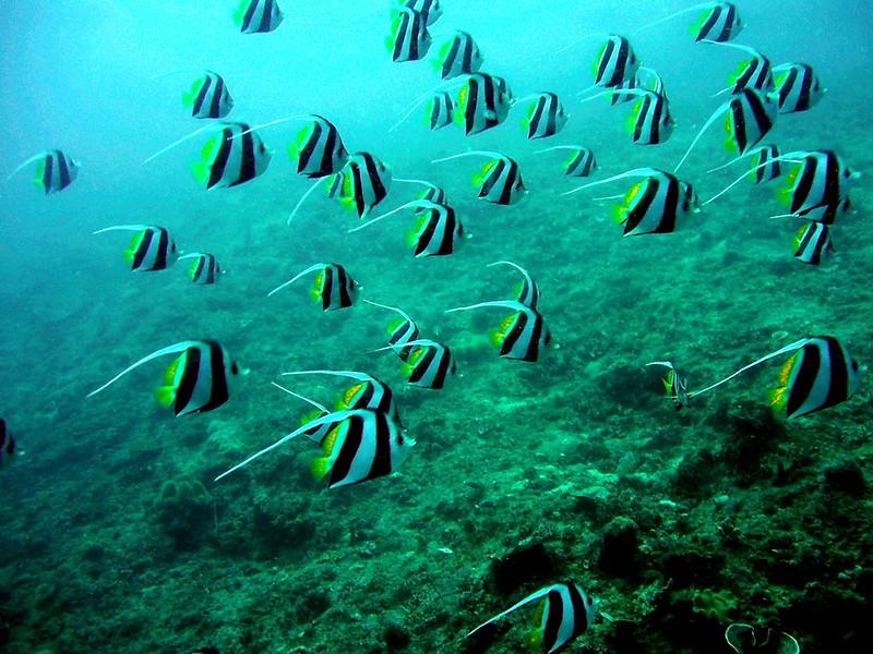 Un cardumen de peces tropicales