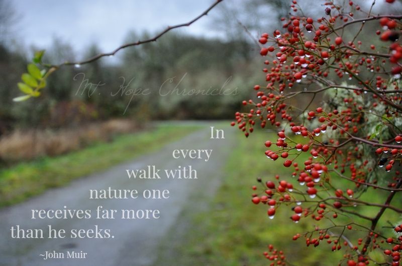 In Every Walk with Nature @ Mt. Hope Chronicles