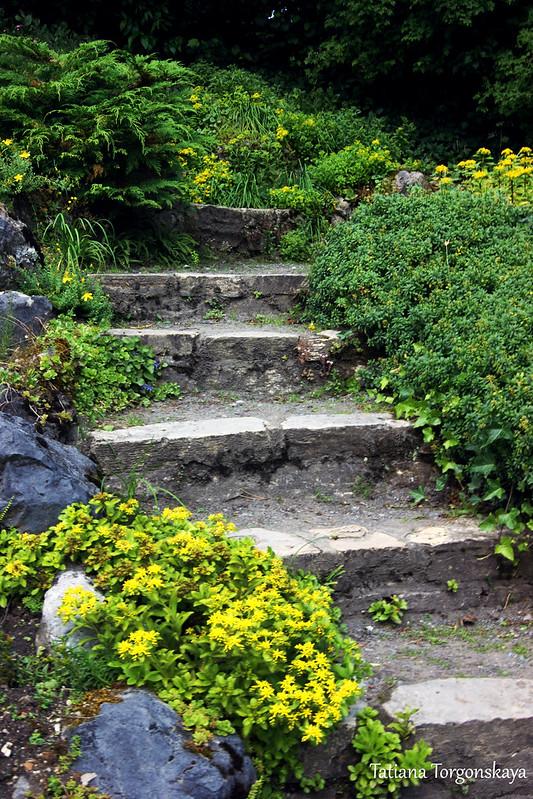 Лестница, окруженная растениями