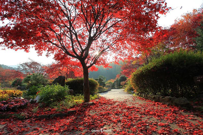 @The Garden of Morning Calm