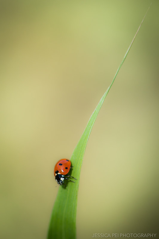 Arbor Hills Nature Preserve Ladybug