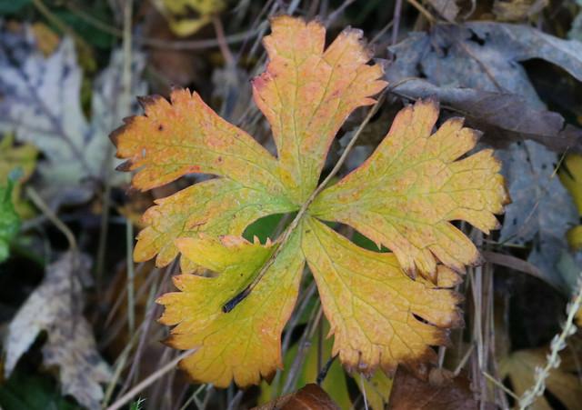 one mostly orange leaf