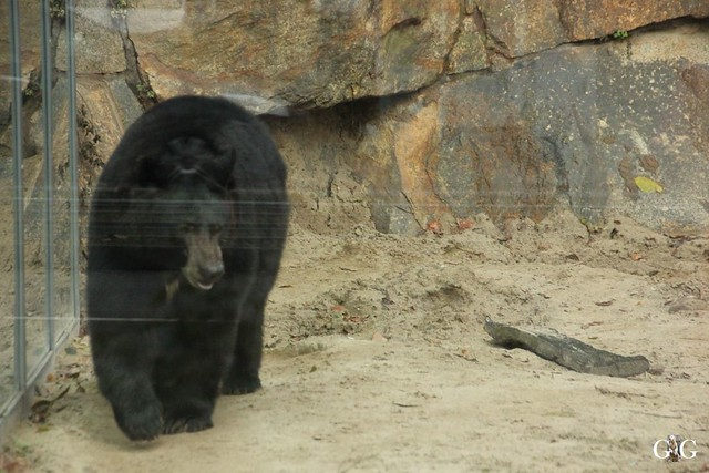 Tierpark Friedrichsfelde 20.11.201646