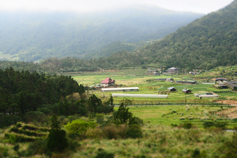 陽明山|Olympus 25mm f1.2 PRO