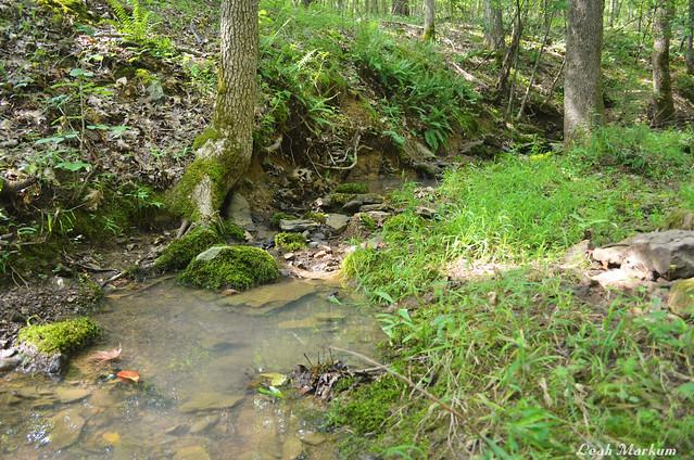 Quaint Stream