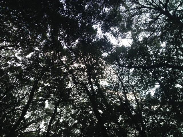 金華山 東坂登山道 森