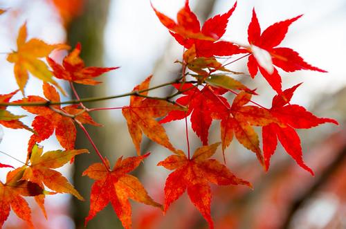 紅葉狩り - 東山公園 09