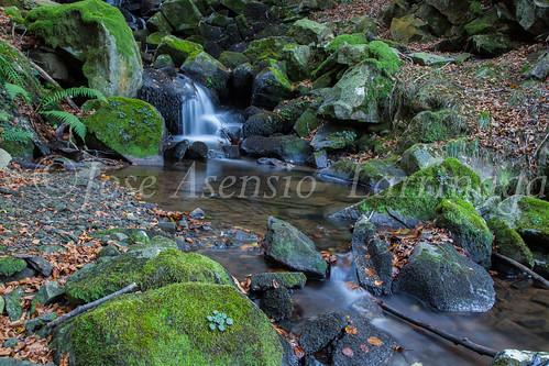 Parque Natural de #Gorbeia #DePaseoConLarri #Flickr      -1445
