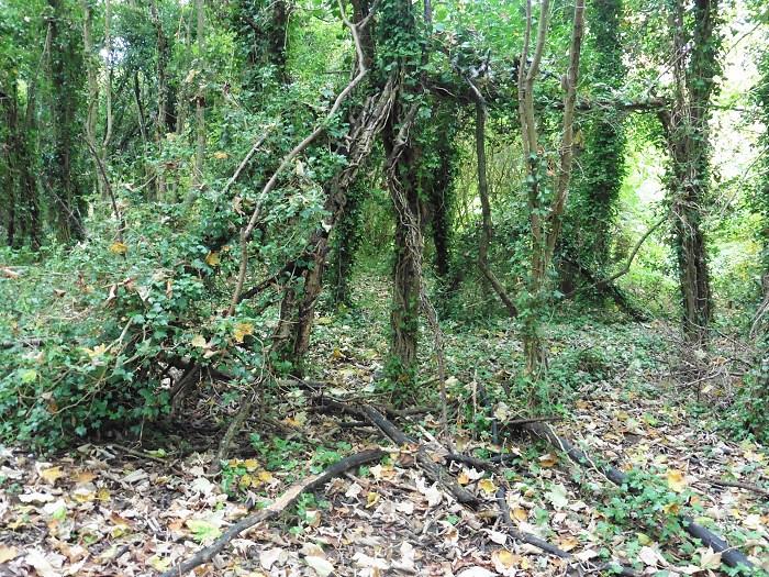 Forest Den