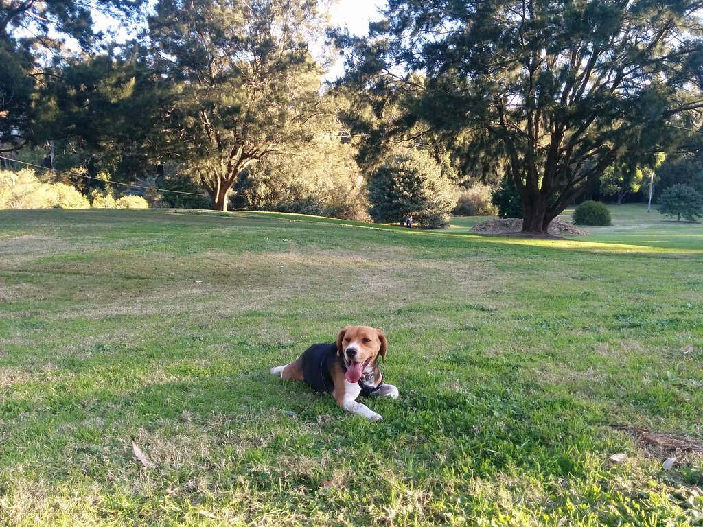 Oscar at Moore Reserve