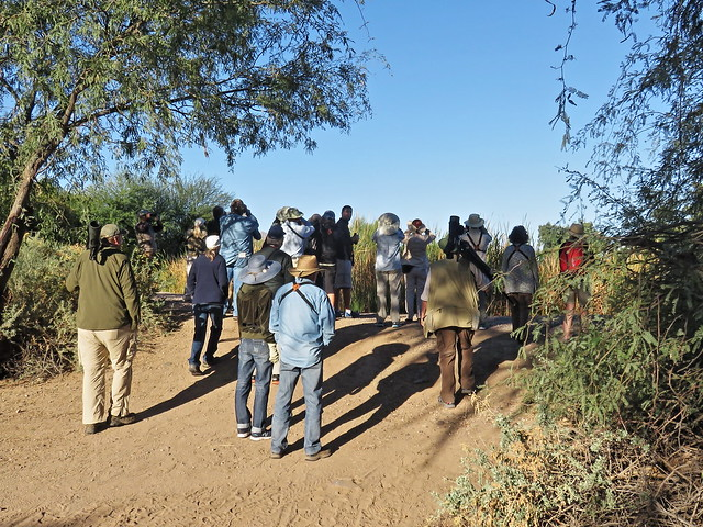 Birders at Sweetwater Wetlands, Tucson, Arizona 20161102