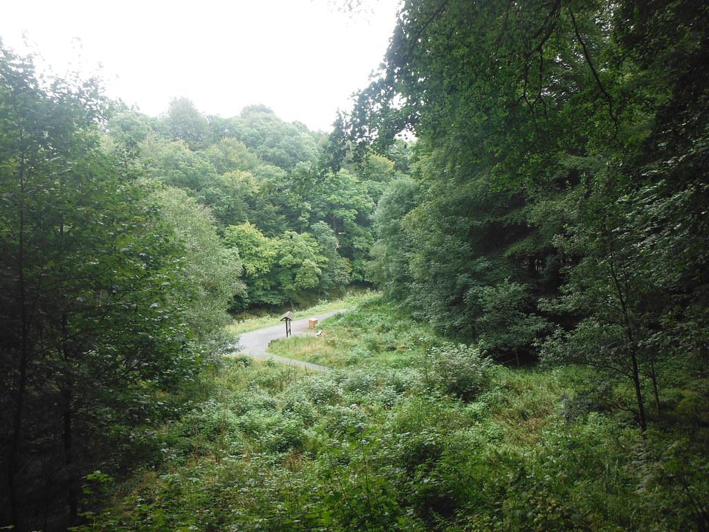 Strid Wood 3