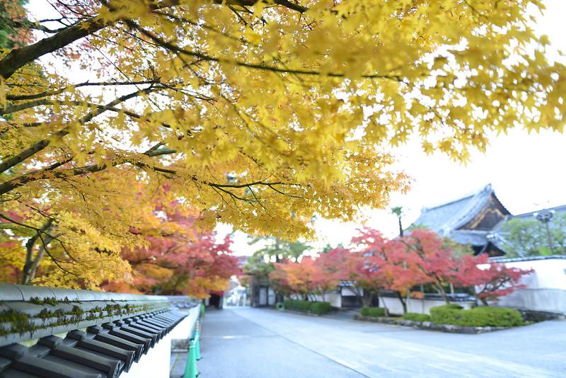 京都・永観堂・紅葉
