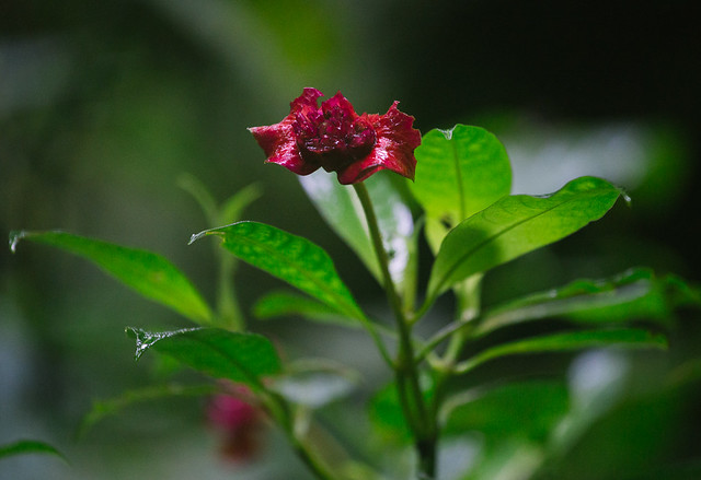 161113_REE_Monteverde_Reserve_71