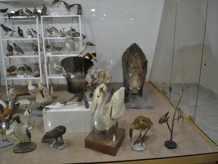 eco museum obiective turistice ruse 5
