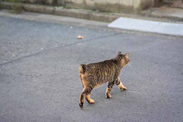 谷中の路地を歩くネコの写真