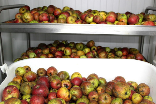 alamacén de manzanas