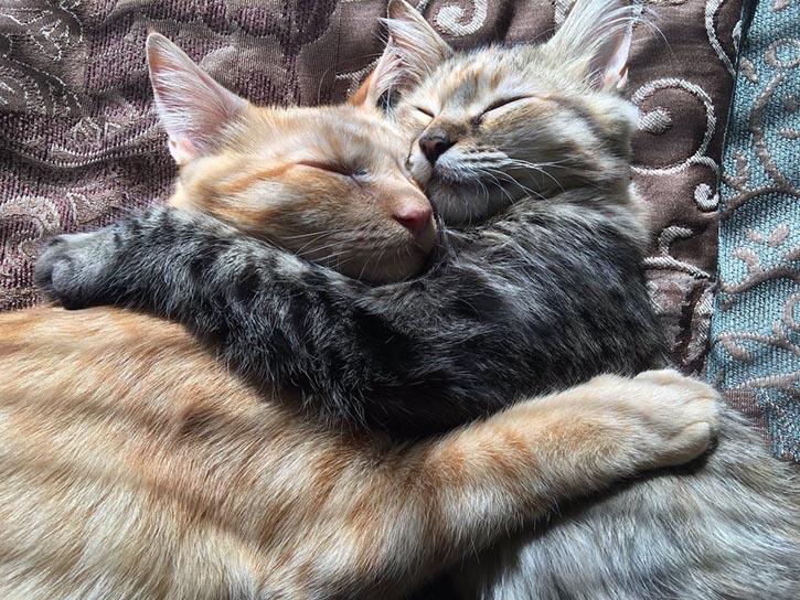 Их любовь покорила интернет - ПоЗиТиФфЧиК - сайт позитивного настроения!