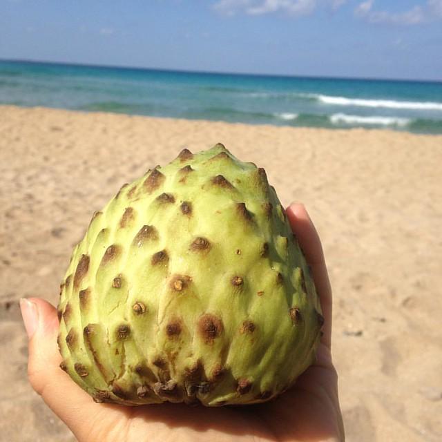 Anona #custardfruit #anona #beach #picnic