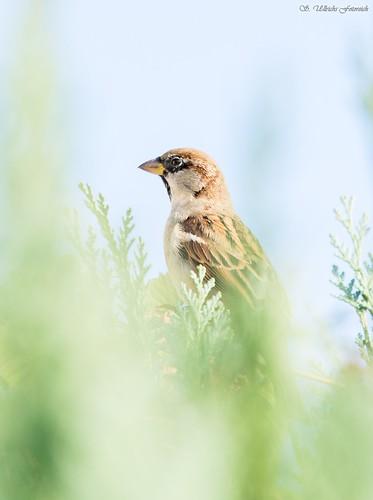 Es vögelt in meinem Garten! - Seite 2 30655084710_76c6336385